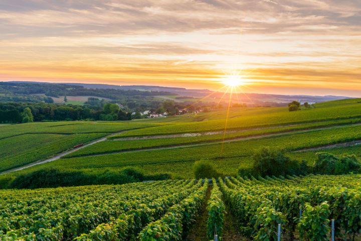 10 Wines From The World's Best Vineyards That You Can Buy Today | HuffPost Life