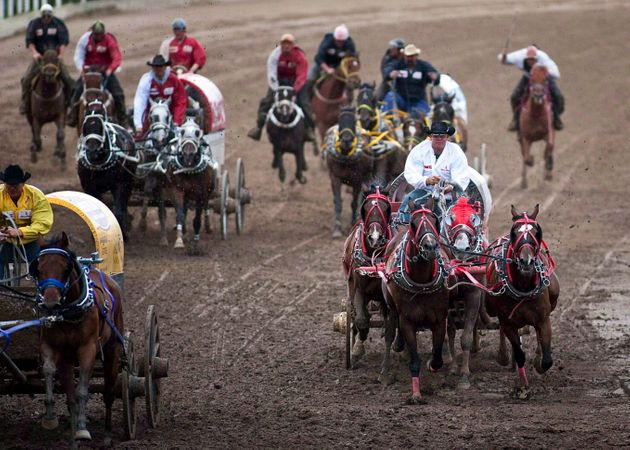 This photo shows teams competing in a chuckwagon race at the Stampede in Calgary. Three horses have already...