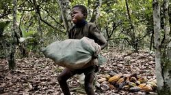 El chocolate, el café y el té 'Comercio Justo': El fraude más grande del