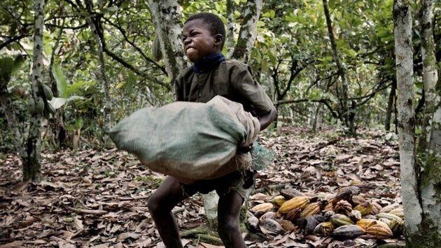 Un niño trabaja recolectando