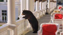 호텔에 온 곰이 베란다에서 일출을 보고