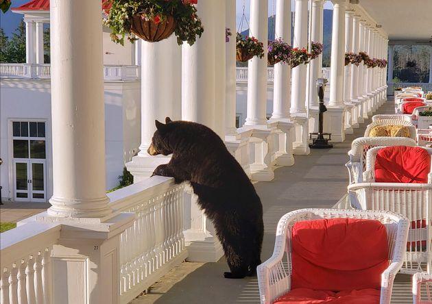 호텔에 들른 곰이 베란다에서 일출을 보고