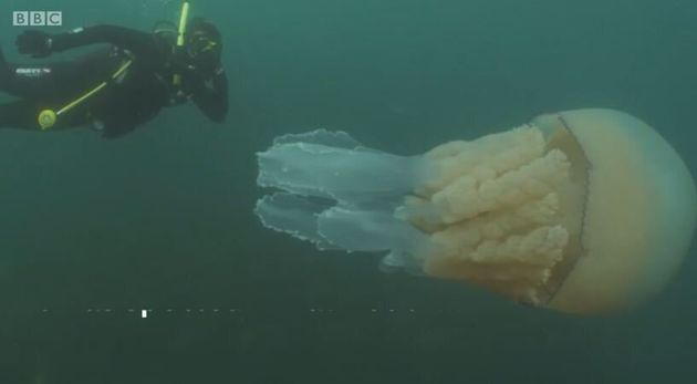 Βίντεο: Δύτες εντόπισαν γιγαντιαία