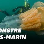 Cette plongeuse a croisé une méduse aussi grande qu'elle dans la