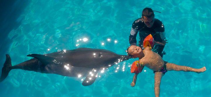Hormis les dauphins, de nombreux animaux sont utilisés pour des thérapies. Le chien, le chat, le cheval en font partie.
