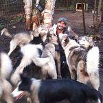 Des propriétaires de chiens «étouffés» par les