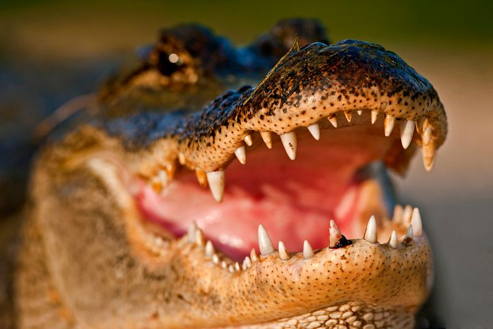 You probably don't need to worry about alligators on meth. But you still shouldn't flush most drugs.