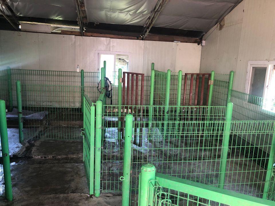 '포해피니스'가 인수한 뒤 청소한 실내견사. 안에 있던 대형견들은 바깥에서 지내고
