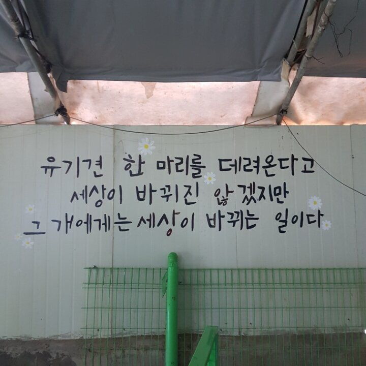 자원봉사자들이 인수한 유기견보호소 '포해피니스'에
