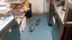 Πιγκουίνοι πέρασαν στην παρανομία: «Διέρρηξαν» δύο φορές εστιατόριο