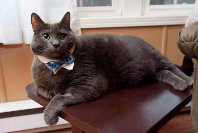 Tiny the cat, whose owners live in Rusagonis, N.B., made headlines around the world for his weight-loss...