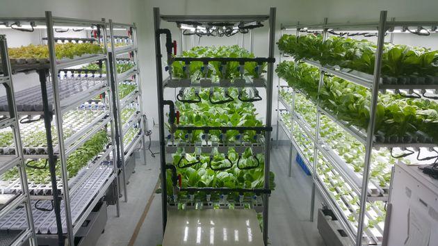 IoTなどの先進技術を活用した植物工場