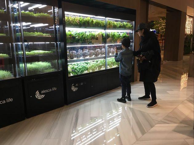 北京のホテル内に設置されたミニ工場