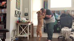 La padrona ha un attacco d'ansia, il cane addestrato la calma