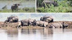 PHOTOS: Rhinos, Tigers, Elephants Rush To Safety As Kaziranga Gets