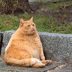 Les chats sont plus gros