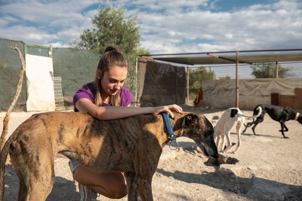 Naiara, la hija mayor de Pura, con uno de los galgos de la