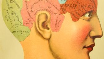 "http://thebrainstormlab.com/banners/ami_banner.jpgThis is a stipple/engraved illustrated plate of a human head showing the lines of Phrenology-- the now defunct field of study, once considered a science, by which the personality traits of a person were determined by ""reading"" bumps and fissures in the skull."