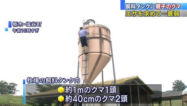 일본의 곰 세 마리가 6m 높이 사료 탱크에