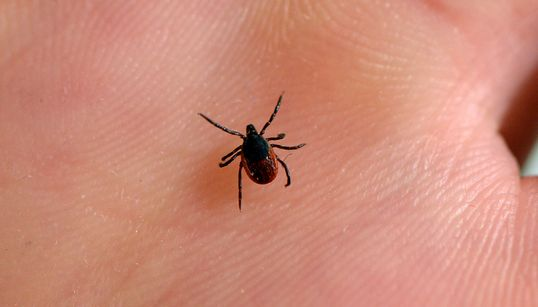 Skip Test, Go Straight To Treatment: That's How Common Lyme disease Is