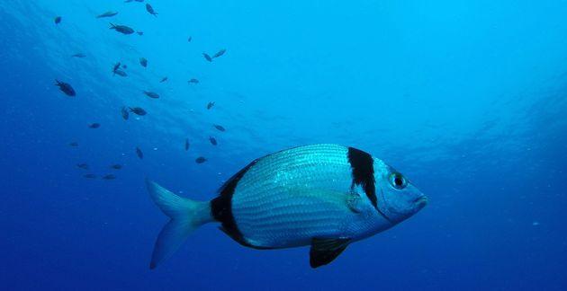 Pourquoi les poissons sont les grands oubliés du bien-être animal