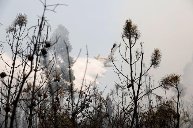 Eίκοσι τουλάχιστον τραυματίες από τις πυρκαγιές που πλήττουν την