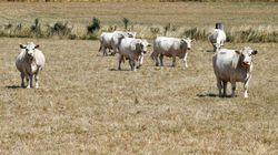 Le plan du gouvernement pour aider les agriculteurs victimes de la
