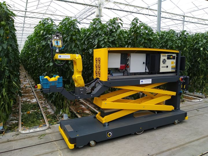 Sweeper, the pepper harvesting robot, in action.