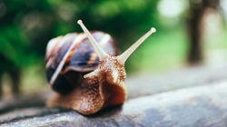 L'escargot, la nouvelle richesse des fermiers