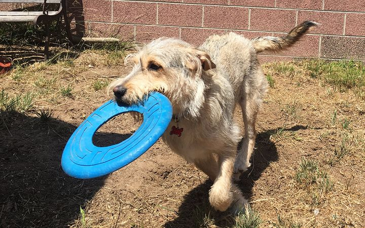 Menehune is a mixed breed dog that needs grooming every 8 weeks.