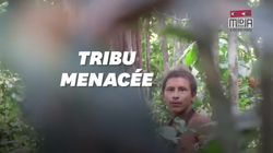 Une ONG filme une tribu amazonienne pour empêcher son