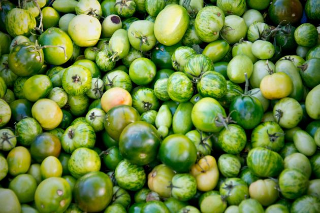 Green Zebra heirlooms are a perfect choice for making fried green