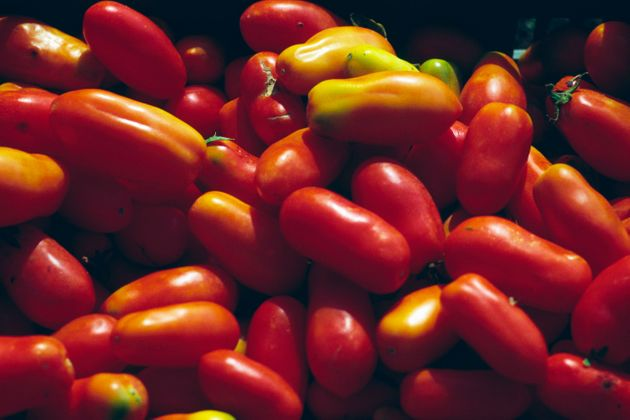 Though most Americans only see San Marzano tomatoes in a can, this is what they look like