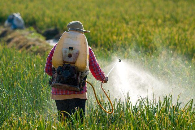Governo Bolsonaro libera 51 agrotóxicos e totaliza 290 no