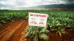 Nova regra da Anvisa permite que agrotóxico extremamente tóxico seja classificado com risco