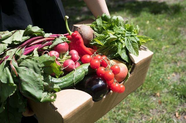 規格に合わないため、廃棄される予定だった野菜。「SirPlus」では、こういった廃棄食材が安価で販売される。