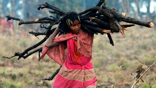 Forest Rights Claims Of 13 Lakh Forest Dwellers Wrongly Rejected, Govt Documents