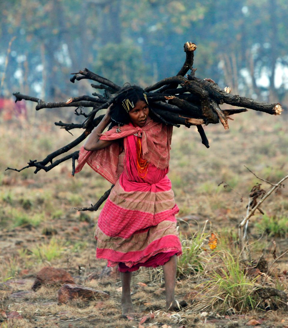 A woman from the Dongria Kondh tribe collects firewood on top of the Niyamgiri mountain, which they worship...