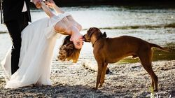 31 Adorable Photos Of Dogs At Weddings That Are A Real