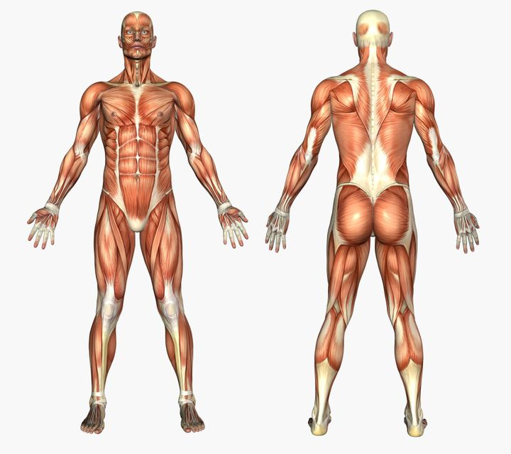 Comment notre corps s'adapte à la canicule et au réchauffement climatique. (photo d'illustration)