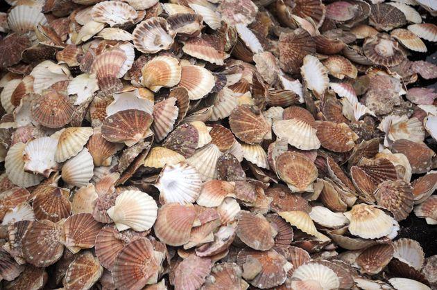 Les dalles rafraîchissantes sont constituées de coquilles Saint-Jacques
