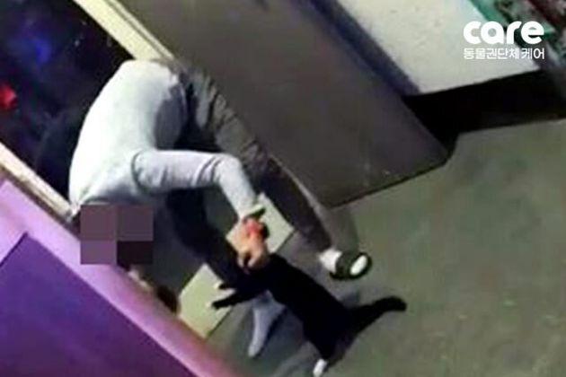 한 PC방 업주가 고양이를 학대하는