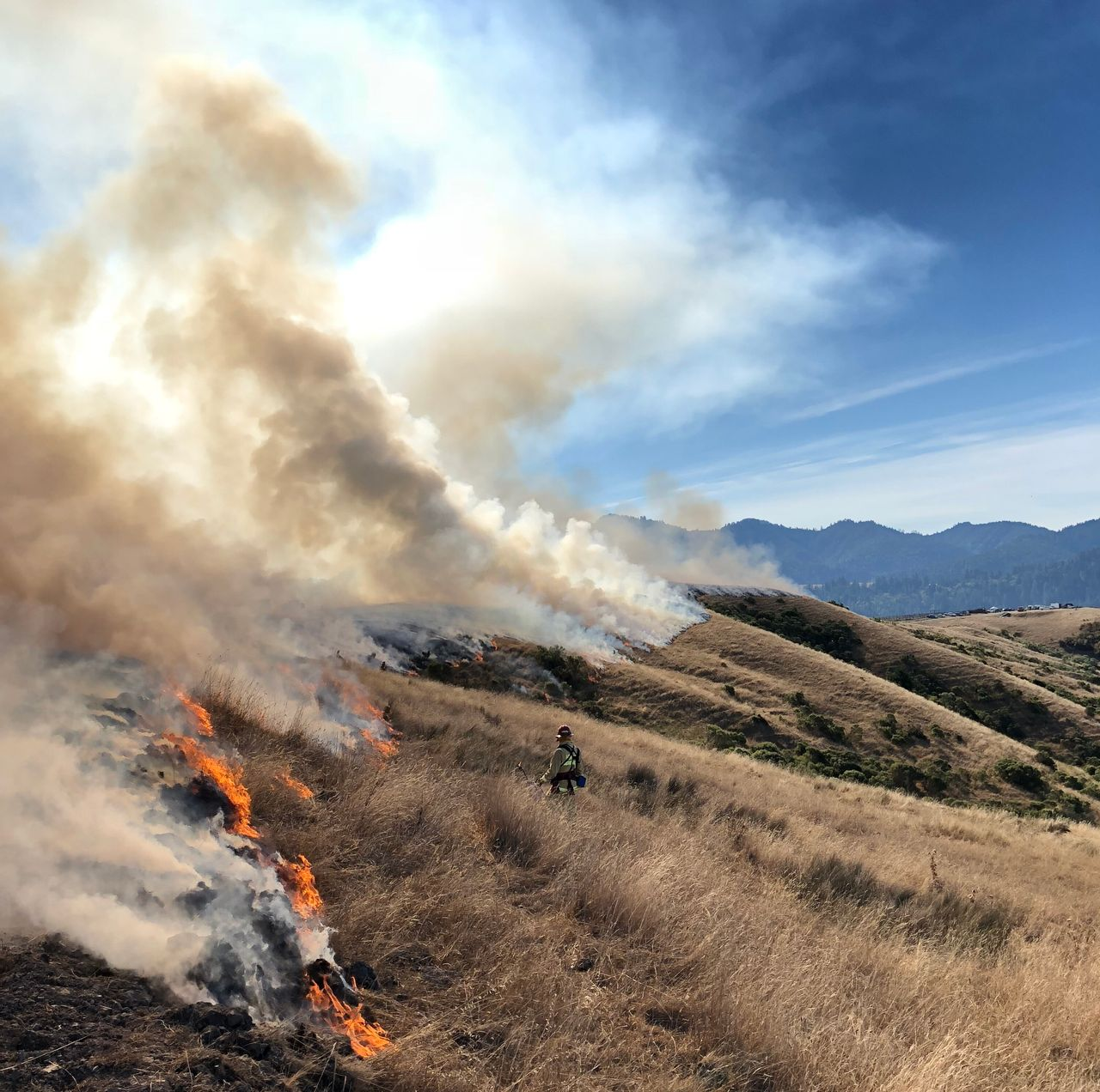 Ranchers in Humboldt County are using prescribed fire to improve coastal rangeland.