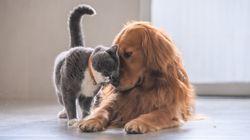 Por que cães têm duas vezes mais neurônios do que