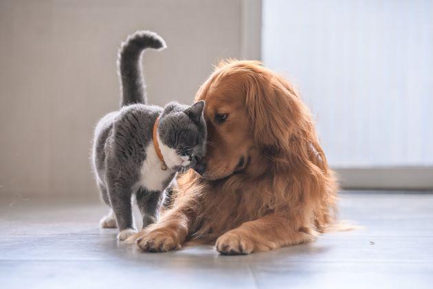 O debate sobre a personalidade dos caninos e dos felinos está longe de