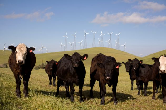 By reducing beef consumption by 19% from 2005 to 2014, Americans reduced carbon emissions equivalent...
