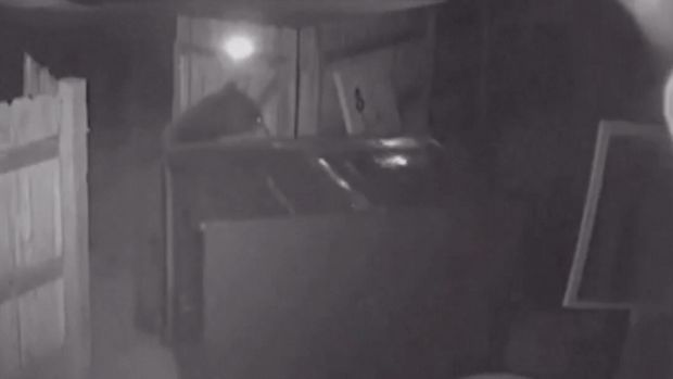 bear tries to steal dumpster from pot dispensary