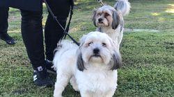勇敢な2匹の小型犬 飼い主の女性を性的暴行から救う