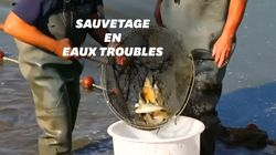 600 kilos de poissons sauvés de la sécheresse dans la