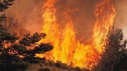 Les forêts de Bouira proies d'incendies